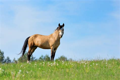 horse female called young filly mare facts garfield veto president james dog mollie