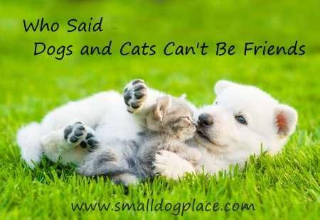 dogs  cats living   advice   harmonious household