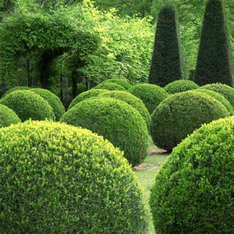 Buxus Sempervirens Box Topiary Balls