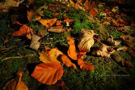 tapis de feuilles mortes 1000 images about leaves on