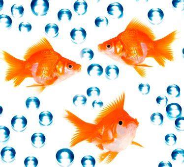 goldfish problems