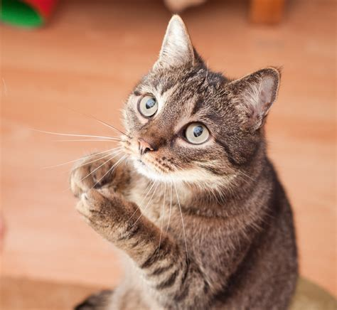 5 Things Cats Know About Life That We Should Learn I