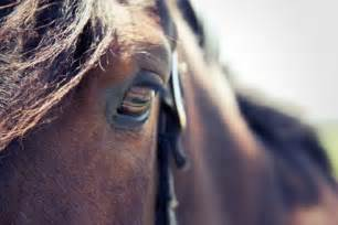 Horse Eye Close Up Photography