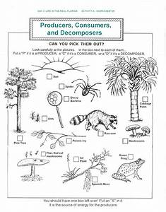 decomposers worksheets for kids | Archbold Biological ...