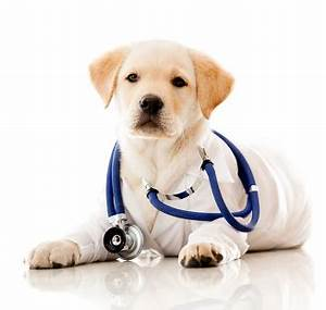 Veterinarians With Cute Animals | www.pixshark.com ...