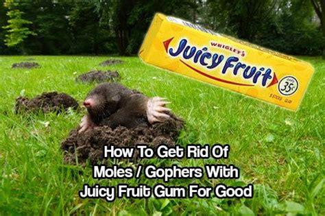 rid  moles gophers  juicy fruit gum