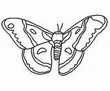 Moth Cecropia Designlooter sketch template