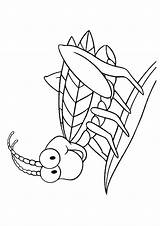 Coloring Insect Pages Realistic Grasshopper Printable Insects Getcolorings sketch template
