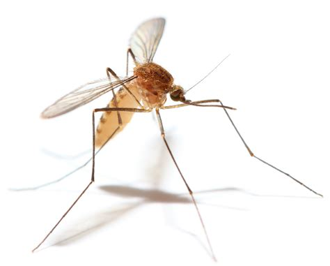 repel mosquitoes in yard 3 common bugs that can kill you