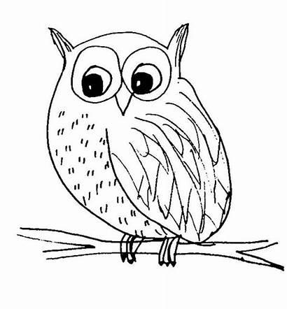 Owl Coloring Sketch Snow Owls Pages Colornimbus
