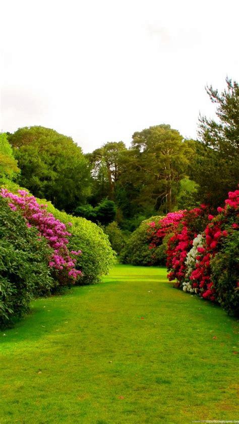Garden Wallpaper by 1080x1920 Flowers Grass Garden Wallpapers Hd Desktop