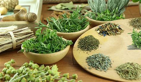 livro reune detalhes de plantas medicinais organics news