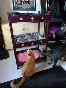 cat bunk beds catster diy make your own kitty bunk bed catster