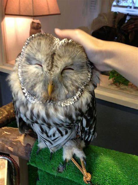 are owls pets london opens a bar where you can pet owls