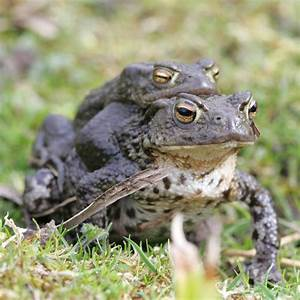 Nature in the Dales - Amphibians & Reptiles