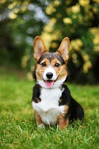 25 Cutest Dog Breeds - Most Adorable Dogs