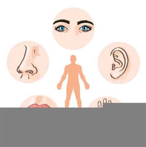 clipart images  sense organs  images  clkercom