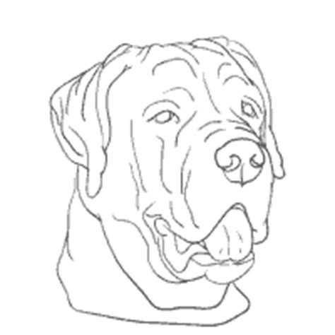 rottweiler coloring pages surfnetkids