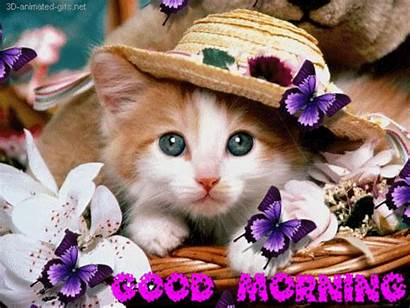 Morning Gifs Animation Cat Butterfly 3d Flower