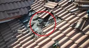 Marder Im Dach Vertreiben : marder auf dem dach raubtiere wie man den marder aus dem haus bekommt die welt den marder auf ~ Orissabook.com Haus und Dekorationen