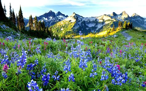 Beautiful Nature Landscape In Spring Wallpapers And Images