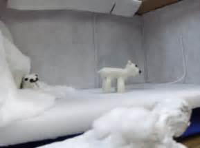 Polar Bear Habitat Diorama Project