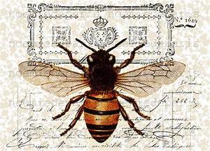Queen bee antique French vintage Paper illustration ...