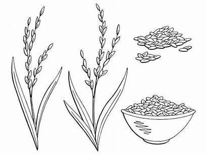 Rice Plant Clip Sketch Vectorified Doodle Vegetables