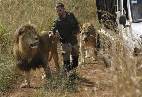 lion  killed woman   care  south african