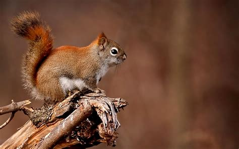 where do squirrels live hd wallpapers