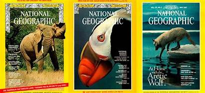 Animals Geographic National Documental Nuestro Scales Rights