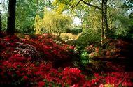 Beautiful Spring Scenes Flowers