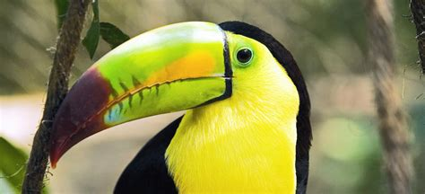 """Tráfico de especies endémicas a precio """"de risa"""": Semahn ..."""