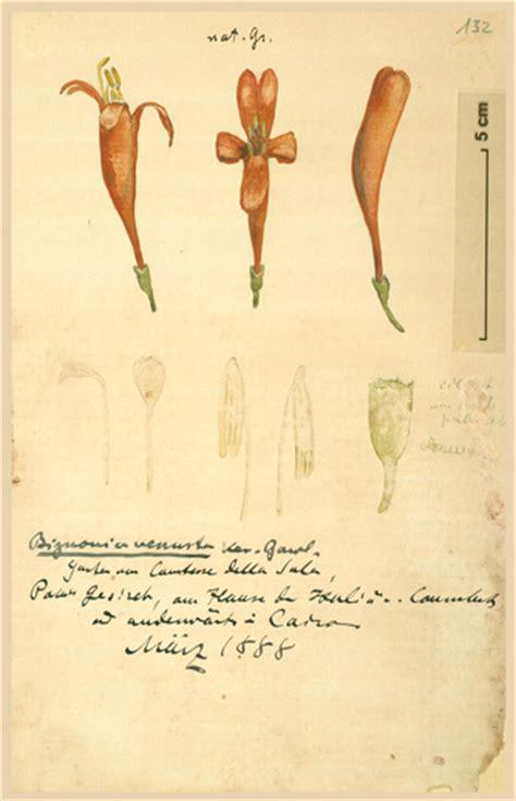 Botanischer Garten Berlin Herbarium by Schweinfurths Sammlung Botanischer Zeichnungen Bgbm