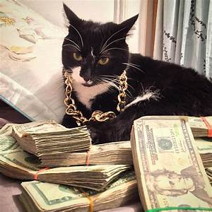 Rich Gangster Cats
