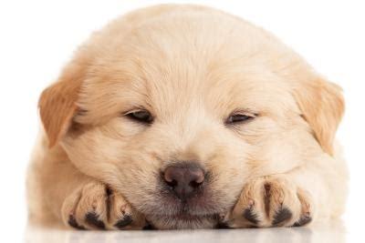 hundewelpen ratgeber tipps vor und nach dem kauf