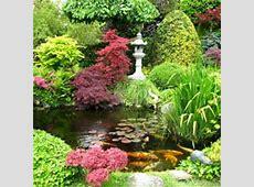 Kit Jardin Zen 15 plantes jardin japonais MonEdenfr