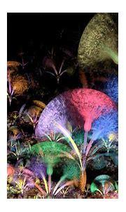 Wildflowers   Wild flowers, Fractal art, Art