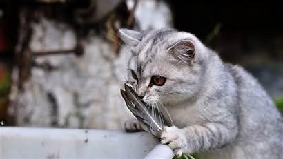 Cats Winter Funny Wallpapers Kittens Wallpapersafari