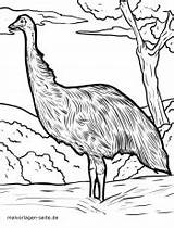 Emu Coloring Malvorlage Kameleon Kleurplaat Printable Related Tiere sketch template