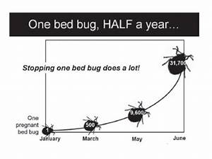 do bed bugs come out during the day do bed bugs come out With do bed bugs come out when the lights are on