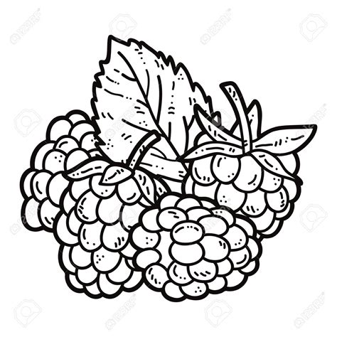 raspberry bush clipart black and white raspberry clipart outline pencil and in color raspberry
