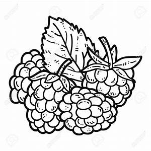 Raspberry Drawing | www.pixshark.com - Images Galleries ...