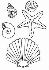 Coloring Starfish Seashells Types Many Seashell Shells Sea Printable Ocean sketch template
