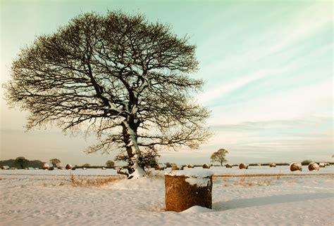 kostenlose foto baum natur draussen ast schnee kalt