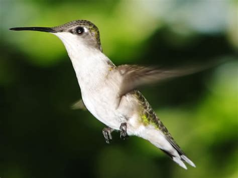 do humming birds have legs yahoo answers
