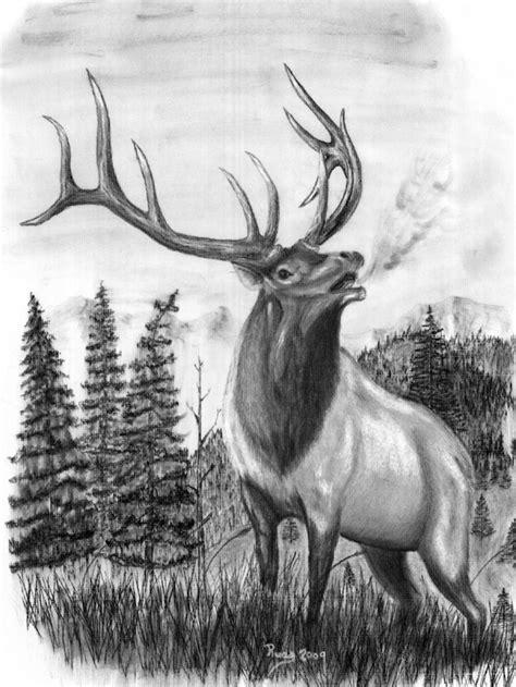 pin  anna rice   pta   elk drawing elk