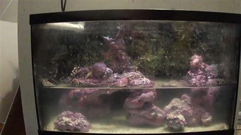 10 Gallon Diy Seahorse Tank