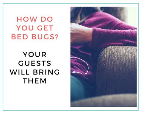 how do you get bed bugs how to get rid of bed bugs a complete guide for your airbnb