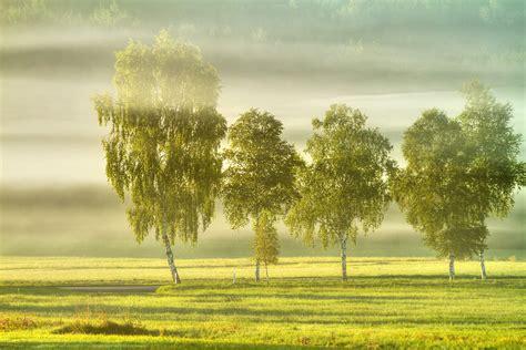 herbstanfang foto bild landschaft herbst nebel
